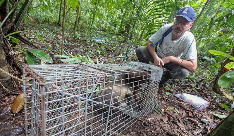 Ben with a recently trapped coati.