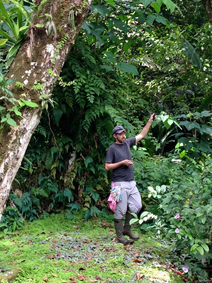 Teague using a radio-antenna to track a bat to its day-roost in Panama.